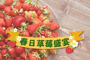 春日草莓盛宴