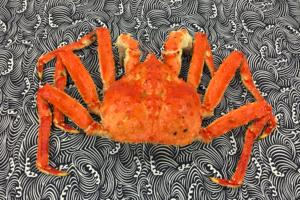 蟹迷至愛!日本直送北海道巨型皇帝蟹+蟹膏醬