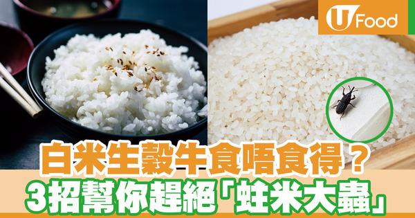 【米蟲防治】春天潮濕易滋生「蛀米大蟲」  3招教你預防白米/意粉生穀牛